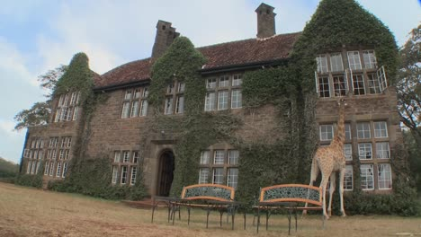 Giraffes-mill-around-outside-an-old-mansion-in-Kenya-7