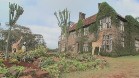 Giraffes-mill-around-outside-an-old-mansion-in-Kenya-14
