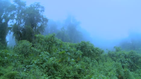 Fog-rolls-in-over-the-jungle-and-rainforest