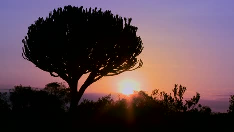 A-beautiful-sunset-shot-with-a-cactus-tree-in-East-Africa