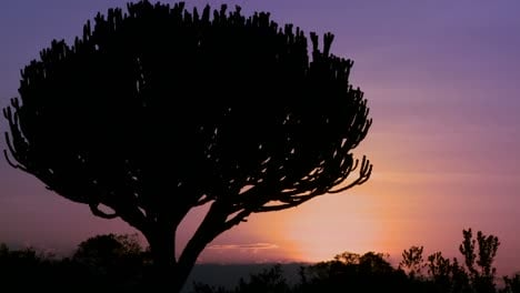 A-gorgeous-sunset-behind-a-cactus-tree-on-the-savannah-of-East-Africa