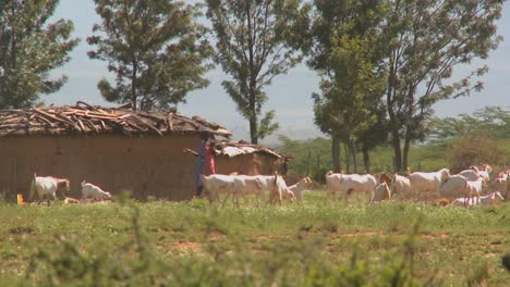 Masai-tribesmen-herd-their-cattle-outside-a-village-in-Kenya