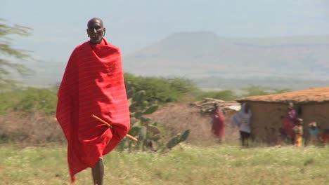 Red-robed-Masai-walking-in-fields-leading-cattle