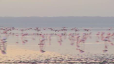 Pink-flamingos-fly-across-Lake-Nakuru-Kenya