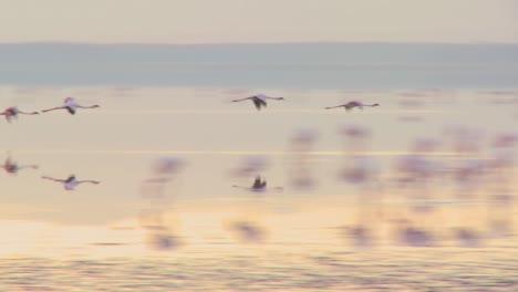 Flamingos-fly-across-Lake-Nakuru-Kenya