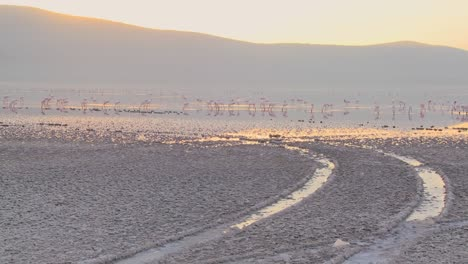 Tire-tracks-go-into-the-distance-at-Lake-Nakuru-Kenya-with-pink-flamingos-in-the-distance