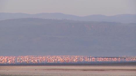 Beautiful-footage-of-pink-flamingos-in-early-morning-light-on-Lake-Nakuru-Kenya-7