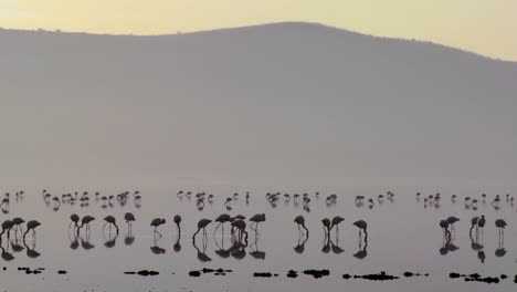 Silhouettes-of-flamingos-on-Lake-Nakuru-Kenya-at-sunrise