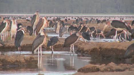 Pájaros-Antiguos-Visitan-Un-Abrevadero-En-El-Parque-Nacional-De-Nakuru-Kenia