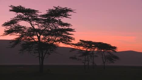 Hermosos-árboles-De-Acacia-Al-Amanecer-En-La-Sabana-Africana