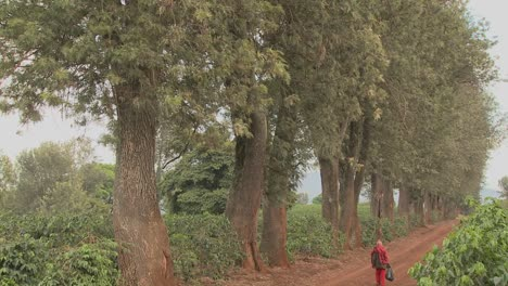 A-worker-at-a-coffee-plantation-walks-down-a-dirt-road-in-Africa