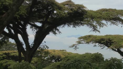 Acacia-trees-loom-over-the-crater-at-Ngorongoro-Crater-in-Tanzania