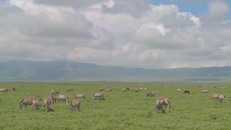 A-slow-pan-across-the-open-savannah-of-Africa-with-zebras-and-wildebeest-grazing