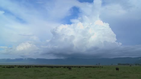 A-wide-shot-of-spectacular-cloud-formations-on-the-plains-of-Africa-with-cape-buffalo-grazing-below