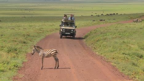 Un-Jeep-De-Safari-Se-Encuentra-Con-Una-Cebra-En-Una-Carretera-Africana