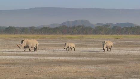Three-rhinos-on-a-muddy-plain-