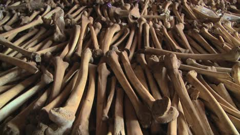 Hundreds-of-leg-bones-line-the-catacombs-of-a-church-following-the-Rwandan-genocide