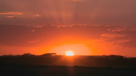 A-radiant-sunrise-on-the-plains-of-Africa