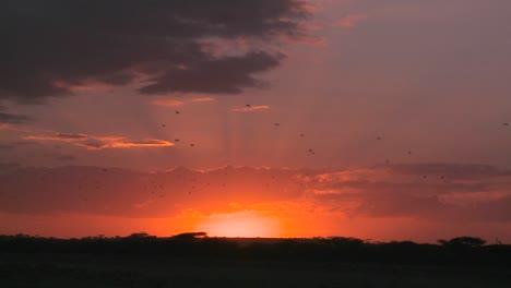 A-dusk-scene-on-the-plains-of-Africa