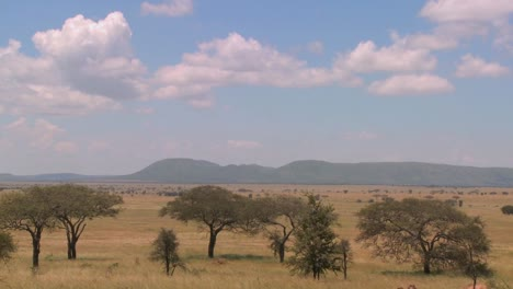 Time-lapse-shot-of-clouds-moving-over-the-Serengeti-plain
