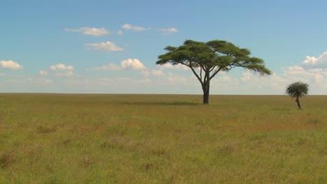 A-lonely-tree-on-the-Serengeti-plain