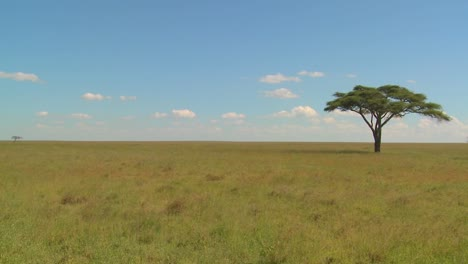A-lonely-tree-on-the-Serengeti-plain-in-Africa