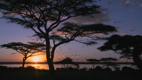 Gorgeous-and-majestic-shot-of-sunrise-on-the-African-plains-with-acacia-trees-foreground