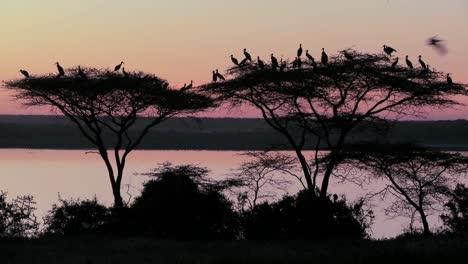 Los-Pájaros-Se-Sientan-En-Un-árbol-De-Acacia-Al-Atardecer-En-África