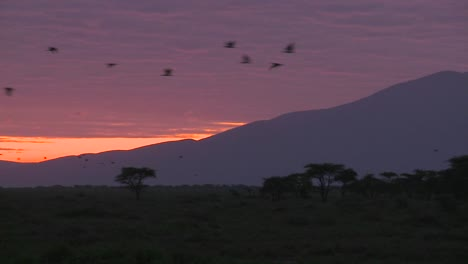 Birds-migrate-across-the-plains-of-Africa-at-dawn-with-volcanos-in-the-background