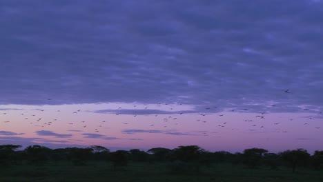Birds-migrate-across-a-purple-sky