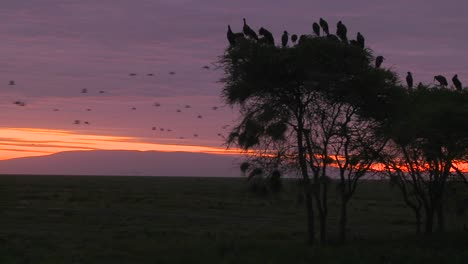 Birds-sit-in-trees-and-watch-others-migrate-at-dawn-on-the-Serengeti