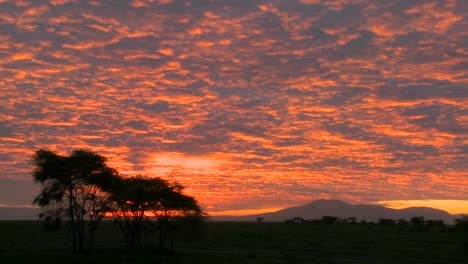 A-gorgeous-orange-sunset-over-the-plains-of-Africa-with-acacia-trees-in-foreground