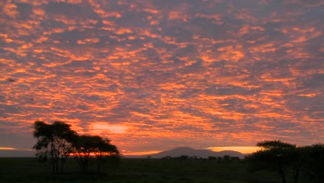 A-gorgeous-red-and-orange-sunset-on-the-plains-of-Africa