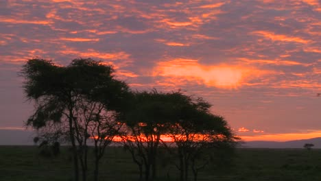 An-orange-sunset-over-the-plains-of-Africa-with-acacia-tree-foreground