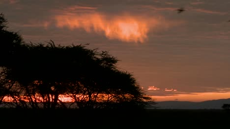 Birds-fly-against-a-red-orange-sky-at-dawn-on-the-plains-of-Africa