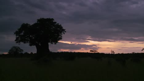 A-beautiful-timelapse-of-baobab-trees-in-Tarangire-park-Tanzania