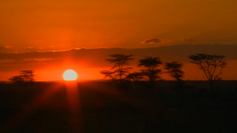 A-beautiful-sunrise-over-the-plains-of-Africa-with-acacia-trees-in-the-distance