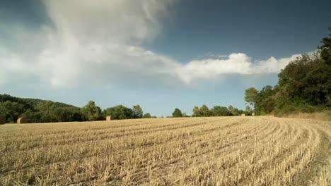 Harvest-Field-02