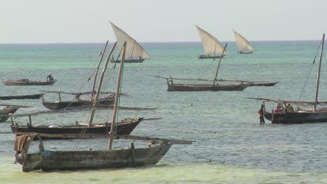 Dhow-sailboats-head-out-to-fish-off-the-coast-of-Zanzibar