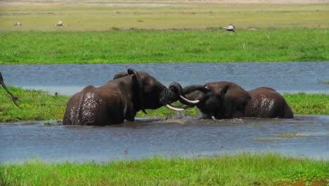 Los-Elefantes-Juveniles-Juegan-Y-Se-Pelean-En-Un-Abrevadero-En-África-1