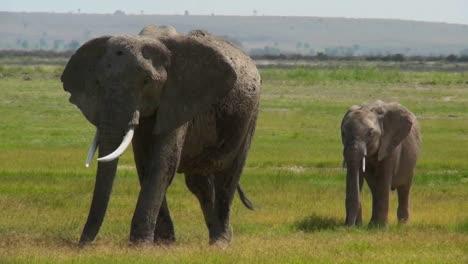Un-Elefante-Camina-Con-Su-Bebé-En-áfrica