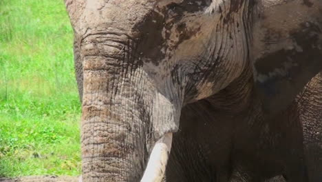 A-close-up-of-an-elephant-face-in-Africa