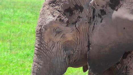 Una-Bonita-Foto-De-Perfil-De-Un-Elefante-Durmiendo