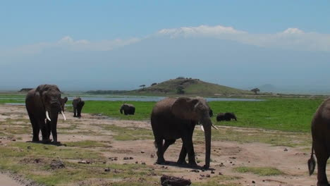 Una-Manada-De-Elefantes-Pasa-Con-El-Monte-Kilimanjaro-Al-Fondo