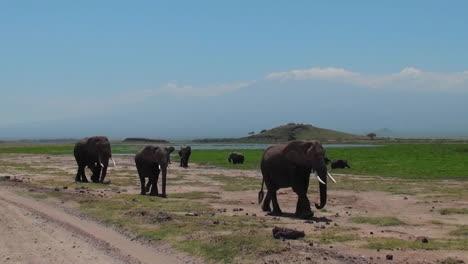 Se-Acerca-Una-Manada-De-Elefantes-Con-El-Monte-Kilimanjaro-Al-Fondo