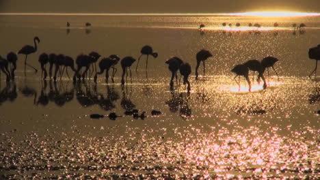 Beautiful-footage-of-pink-flamingos-in-early-morning-light-on-Lake-Nakuru-Kenya-16