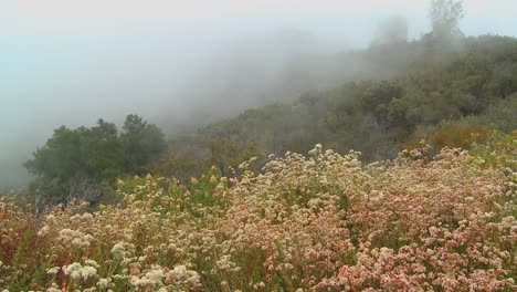 Fog-blows-over-a-mountain-along-the-coast-of-California-1