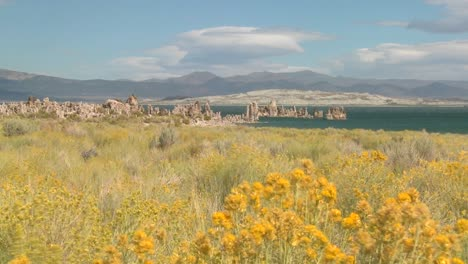 Brush-blows-in-the-foreground-of-this-shot-of-Mono-lake-California