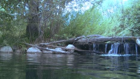 Una-Toma-Que-Se-Mueve-Desde-Arriba-Del-Agua-Hacia-El-Agua-Revela-Una-Trucha-Arco-Iris-Nadando