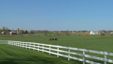 An-amish-farmer-uses-horses-to-plow-his-fields